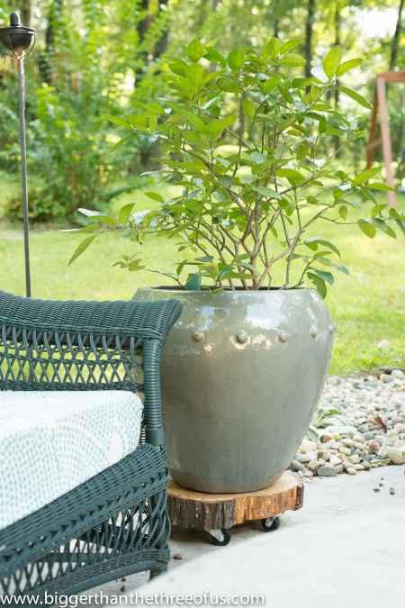 8-practical-ways-to-repurpose-tree-stumps