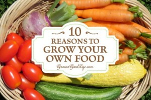 10 Reasons To Grow Your Own Organic Food