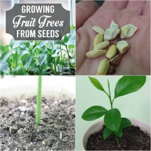 How To Grow Fruit Trees From Seeds (How-To Guide)