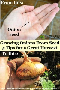 How To Grow Onions From Seed – 5 Tips For A Great Harvest