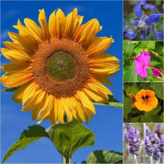pest-fighting-flowers