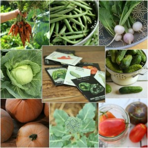 Seed Starting Guide For A Brilliant And Abundant Garden