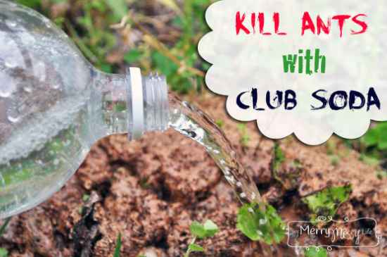 10-diy-effective-and-antural-ant-killer-recipes