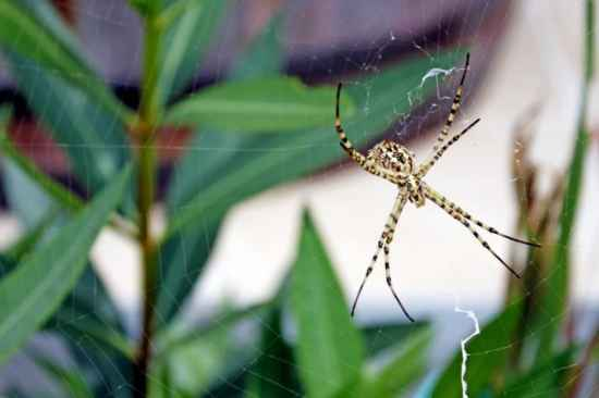 3-keep-spiders-out-of-your-home