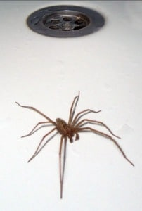 9-keep-spiders-out-of-your-home