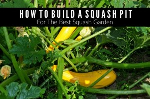 How To Build A Squash Pit For The Best Squash Garden