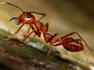 14 DIY Effective And Natural Ant Killer Recipes
