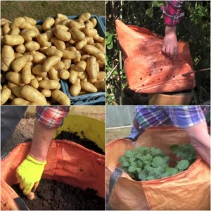 How To Grow Potatoes In A Bag For Easy Gardening