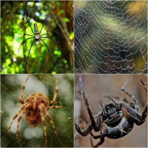 12 Ways To Keep Spiders Out Of Your Home