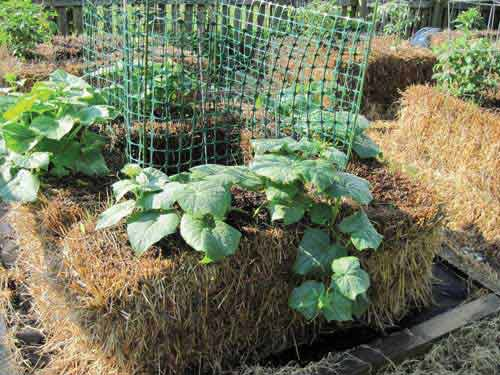 self-fertilizing-hay-bale-garden-bed