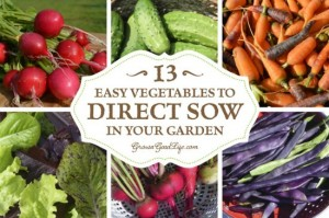 13 Vegetables To Direct Sow Into Your Garden