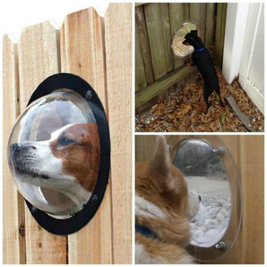 This dog fence window is just one of many holiday gift ideas.
