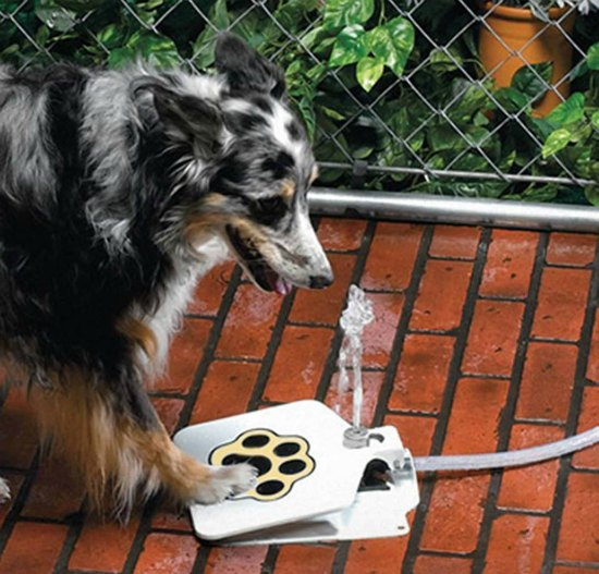 This dog fountain is just one of many holiday gift ideas.