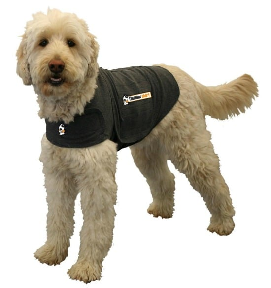 This Thundershirt is just one of many holiday gift ideas.