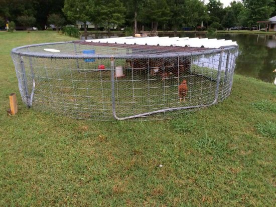 This trampoline coop is just one of many holiday gift ideas.